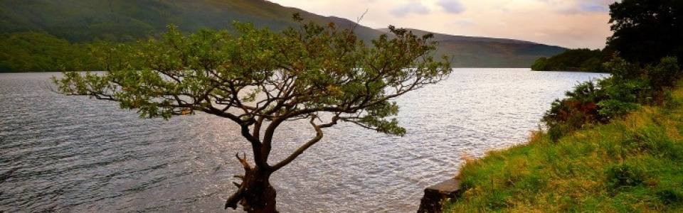 Tree730x306